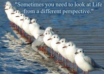 sometimes-you-need-to-look-at-life-from-a-different-perspective-quote-1